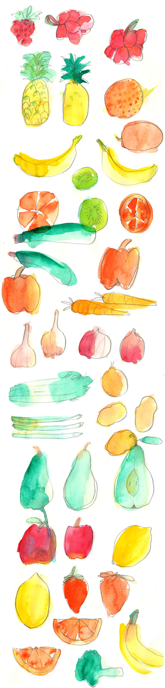 ballasiotes-seattle-art-watercolor-fruits1